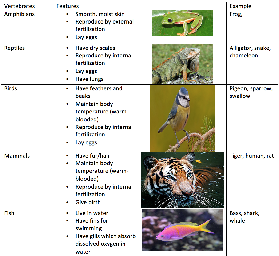 Characteristics and classification of living organisms ...